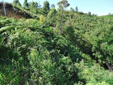 Terrenos - Terreno Azambuja